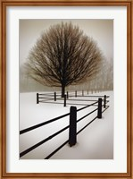 Solitude Fine-Art Print