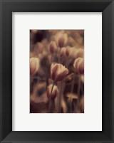 Tinted Tulips I Fine-Art Print