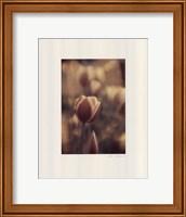 Tinted Tulips II Fine-Art Print