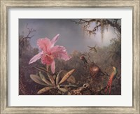 Cattleya Orchid and Three Brazilian Hummingbirds Fine-Art Print