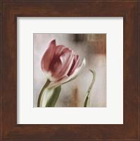 Tulip Front Fine-Art Print