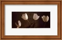 Illuminating Tulips III Fine-Art Print