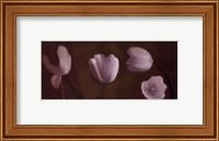 Illuminating Tulips IV Fine-Art Print