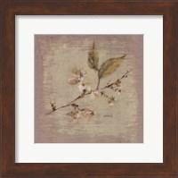 Apple Blossom Square Fine-Art Print