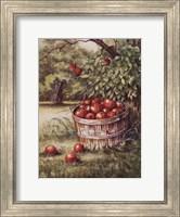 Apple Orchard Fine-Art Print