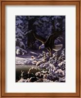 Eagle In Flight Fine-Art Print