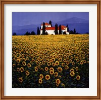 Sunflowers Field Fine-Art Print