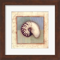 Shell Accents II Fine-Art Print