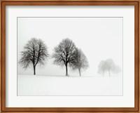 Winter Trees II Fine-Art Print