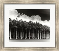 White Palms, Costa Rica Fine-Art Print