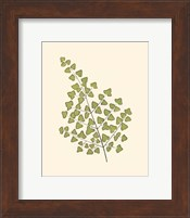 Woodland Ferns II Fine-Art Print