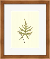 Woodland Ferns IV Fine-Art Print