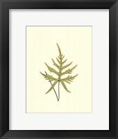 Woodland Ferns IV Fine-Art Print