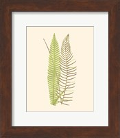 Woodland Ferns V Fine-Art Print