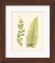 Woodland Ferns VI Fine-Art Print