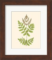 Woodland Ferns VII Fine-Art Print
