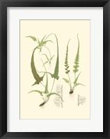 Spring Ferns II Fine-Art Print