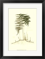 Spring Ferns III Fine-Art Print
