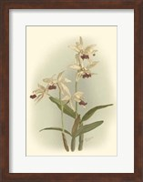 Orchid Garden I Fine-Art Print