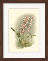 Orchid Garden II Fine-Art Print