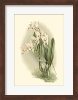 Orchid Garden III Fine-Art Print