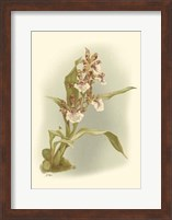 Orchid Garden IV Fine-Art Print