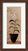 Asian Orchid I Fine-Art Print