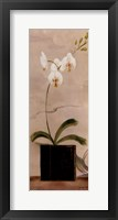 Asian Orchid II Fine-Art Print