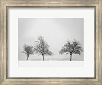 Silhouettes Of Winter II Fine-Art Print