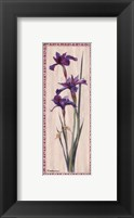 Iris Panel II Fine-Art Print