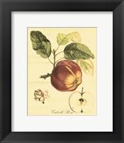 Petite Tuscan Fruits I Fine-Art Print