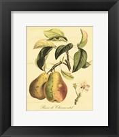 Petite Tuscan Fruits IV Fine-Art Print