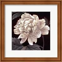 Full Bloom I Fine-Art Print