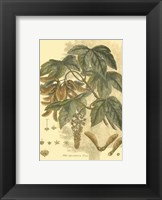 Small Antique Sycamore Tree Fine-Art Print