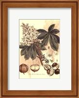 Small Antique Horse Chestnut Tree Fine-Art Print