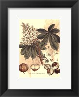 Small Antique Horse Chestnut Tree Fine-Art Print