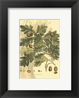 Small Antique Oak Tree Fine-Art Print