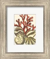 Small Coral Medley II Fine-Art Print