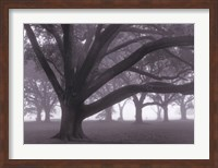 Oak Grove in Fog (black & white) Fine-Art Print