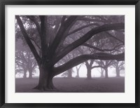 Oak Grove in Fog (black & white) Fine-Art Print