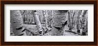 Dixie National Forest - Utah - Usa Fine-Art Print