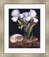 White Iris with Shell Fine-Art Print