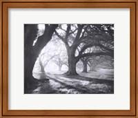 Oak Alley, Light and Shadows Fine-Art Print