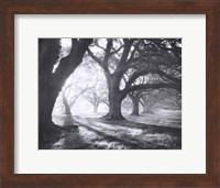 Oak Alley, Light and Shadows Fine-Art Print