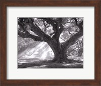 Andrew Oak, Afternoon Light Fine-Art Print