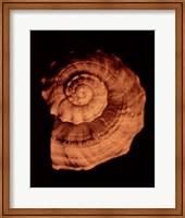 Proteus Shell XIII Fine-Art Print
