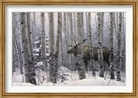 A Walk in the Woods Fine-Art Print