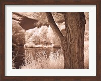 Lakefront View II Fine-Art Print