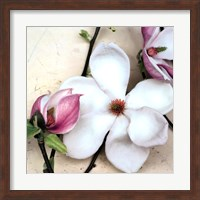 Magnolia Diva I Fine-Art Print