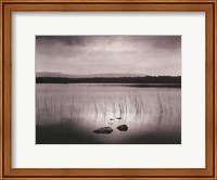 Lough Bunny Fine-Art Print